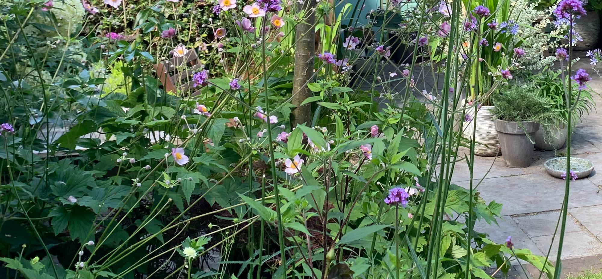Een tuin die bloeit en boeit. Van het vroege voorjaar tot het late najaar.